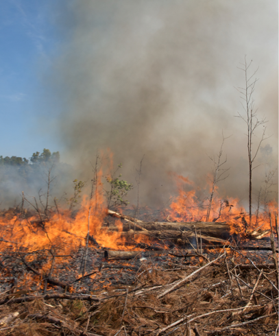 prescribed-burns-image